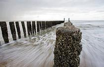 Northsea with seashells on groyne by Johan Wouters