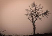 Foggy Twilight  by Tiago Pinheiro
