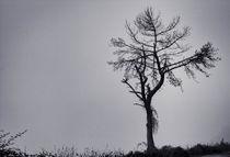 Foggy Twilight BW by Tiago Pinheiro
