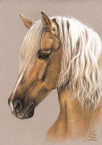 Berber Hengst Portrait von Nicole Zeug
