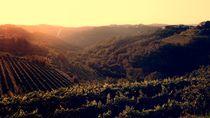 Wine view von designinglives