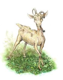 Bambi the goat von klekettle
