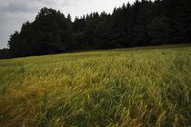 Selkach-frhling-11-06-13-0052