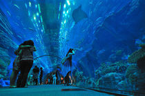 Dubai-aquarium-panorama