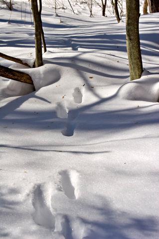 Animal-footprints774