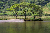 Trees on the Lake Shore in England's Lake District von Louise Heusinkveld