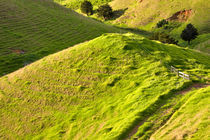 Rolling Hills of the New Zealand Landscape by Louise Heusinkveld