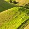 Farmland-bay-of-islands3132