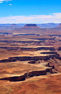 Canyonlands from the Green River Overlook by Louise Heusinkveld