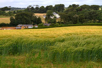 South-devon-countryside6165a