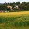 South-devon-countryside6165a