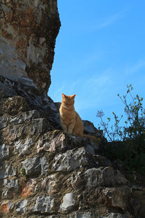 Cat on a Wall by Louise Heusinkveld