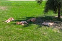 Sleeping-dogs0178