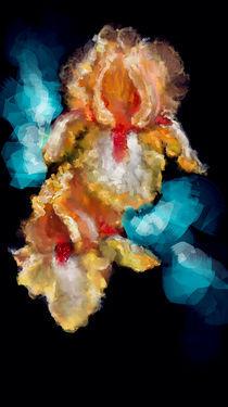 Iris by Evgeniya Kuleshova