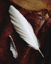 White Feather von Greg Wright