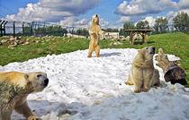 Jw-090814-sneeuwijsberennuenen
