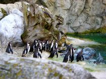 Penguins,Schönbrunn Zoo by Mirela Oprea