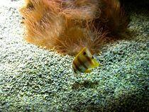 Fish,Schönbrunn Zoo by Mirela Oprea