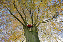 Tree surgeon in a tree von Johan Wouters