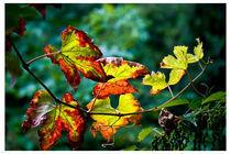 leafs by Maciej Juszczak