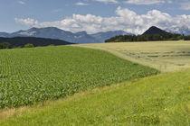 Schiefling-felder-5-11-06-25-0023