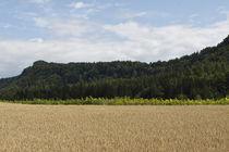 Keutschach-kornfelder-sommer-11-07-26-0079