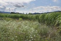 Keutschach-kornfelder-sommer-11-07-26-0099