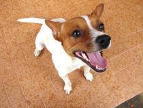 Happy dog by Marcos Braga