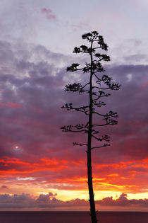 Pacific Sunset by Eye in Hand Gallery
