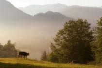 Wenn der Morgen erwacht in den Bergen by pichris