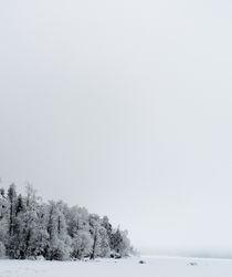 Treesonthe-lake