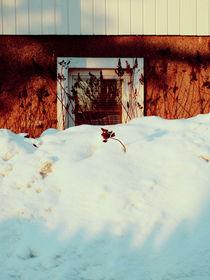 Snowindow
