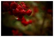 looks like cherrys by Andreia Costa