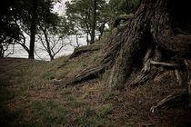 Roots by Rodrigo Marchán López
