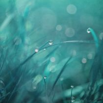'morning droplets' von Priska  Wettstein
