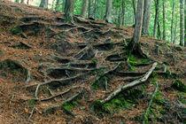 Deep Roots by Dan Dorland