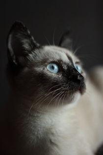 Siamese cat by Marta Vilhena