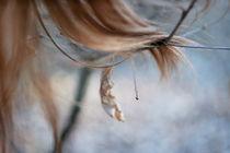 autumn by Malgorzata Huzar