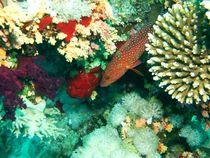 Red fish von Tamara Crnko