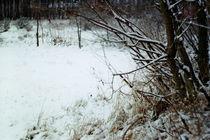 winter by Malgorzata Huzar