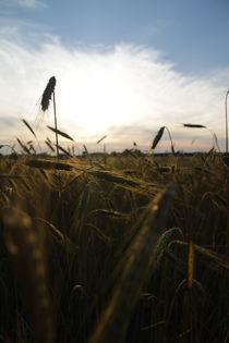 The Last Sunshine by Stefan Bruett