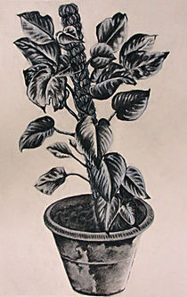 Pot Plant von John Lanthier