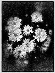 Les Fleurs du mal, flores del mal by Ricardo Anderson
