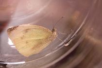 Butterfly 1 von Tahani Waheeb