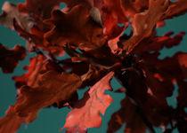 Herbstlaub - Jahreszeit - Nahaufnahme - Poster von Jens Berger