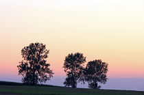 3 Pappeln im Abendlicht by Wolfgang Dufner