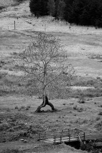 Walking tree von Martin Kubes