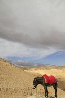 Judean Desert, a donkey in Wadi Qelt by Hanan Isachar