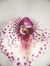orchid. by Aiste Ališauskaite