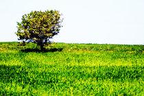 green field von Loukas Dimitropoulos